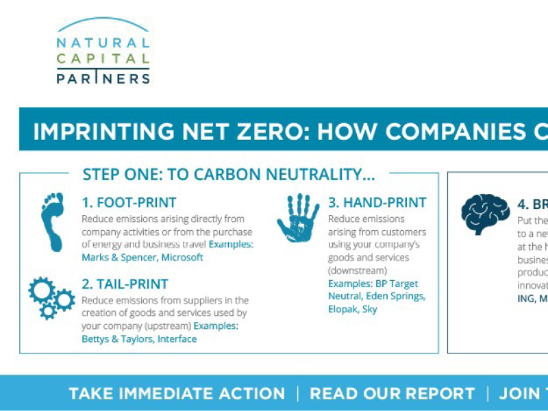 Net Zero in Practice: How Brands Can Turn Targets Into Action